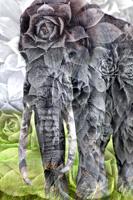 3_UnityArt_Nabiha+Thom_Ngorongoro_20112_contes